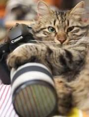 Искусство фотографии. курсы
