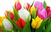 Тюльпаны к 8 Марта! Доставка по всей России!