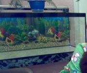 Продам аквариум (330)